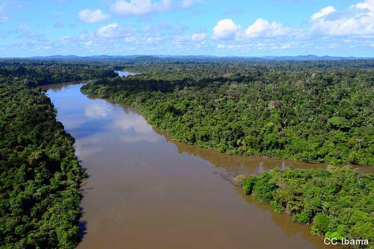 Historique : l'Amazonie reconnue sujet de droits en Colombie
