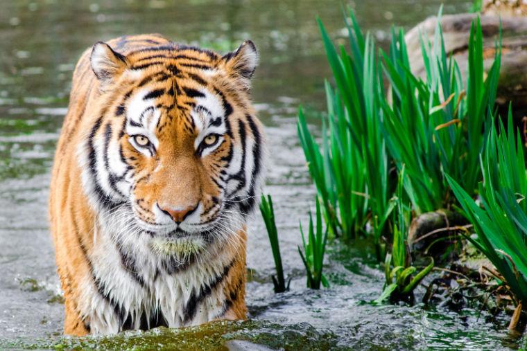 Inde : une Haute Cour reconnaît les droits du règne animal