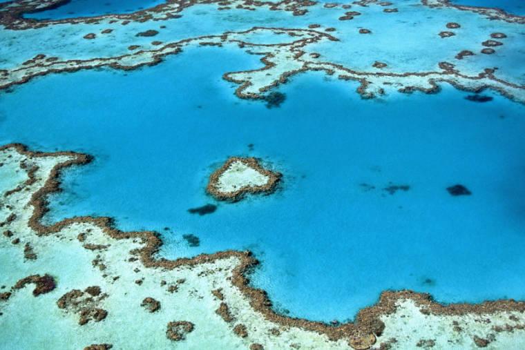 Droits Grande Barrière Corail